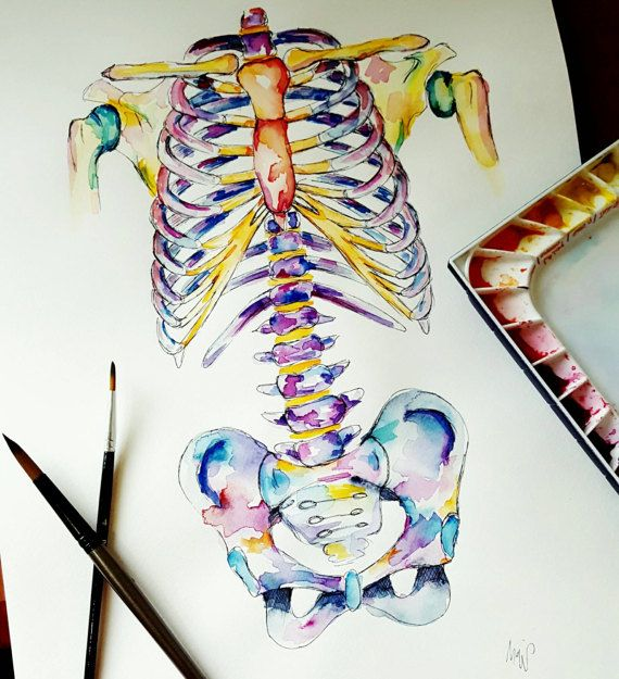 Medical Anatomy Art - Watercolour Painting - Axial Skeleton ...