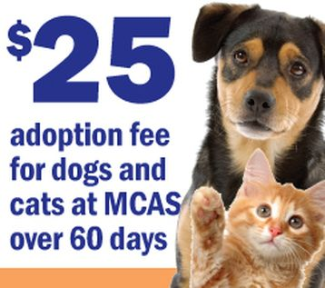 Montgomery tx shelter on Hwy 242 Adoptable pets in Texas