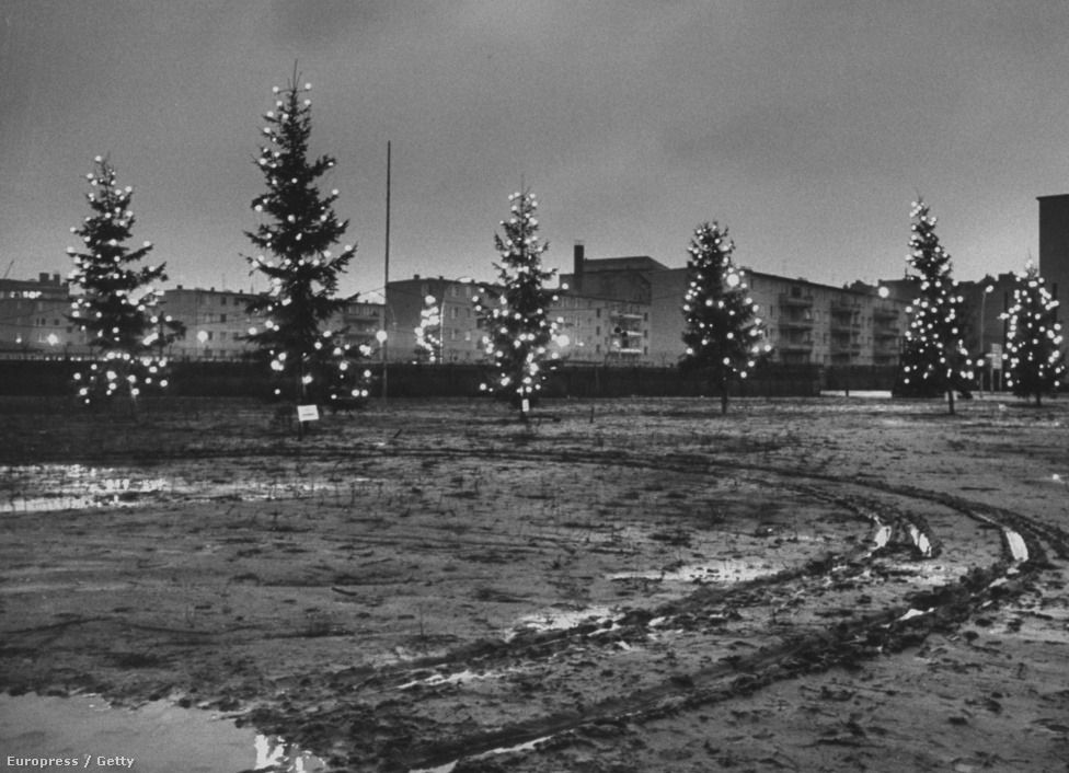 christmas trees lining the west side of the berlin wall on berlin wall id=47918