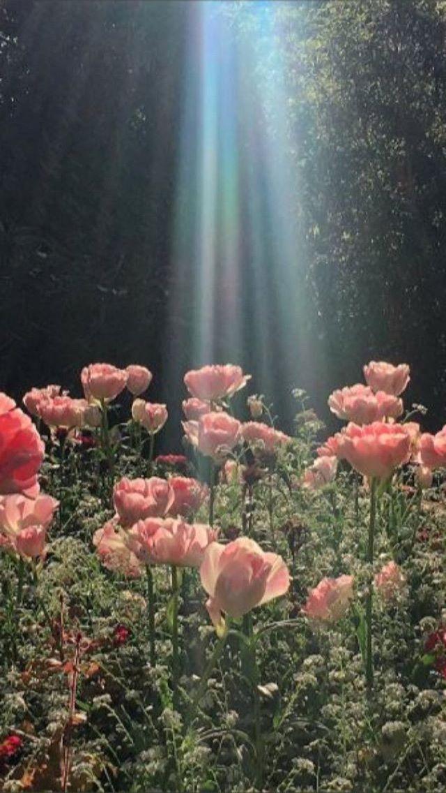 Flower Garden Aesthetic