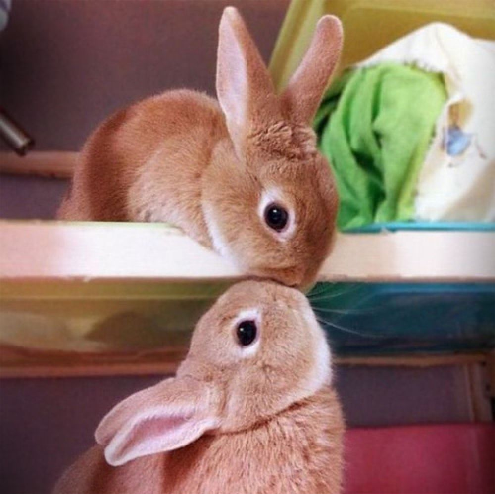I Love You Bunny Love You Meme Funny Good Morning Memes Cute Quotes For Him