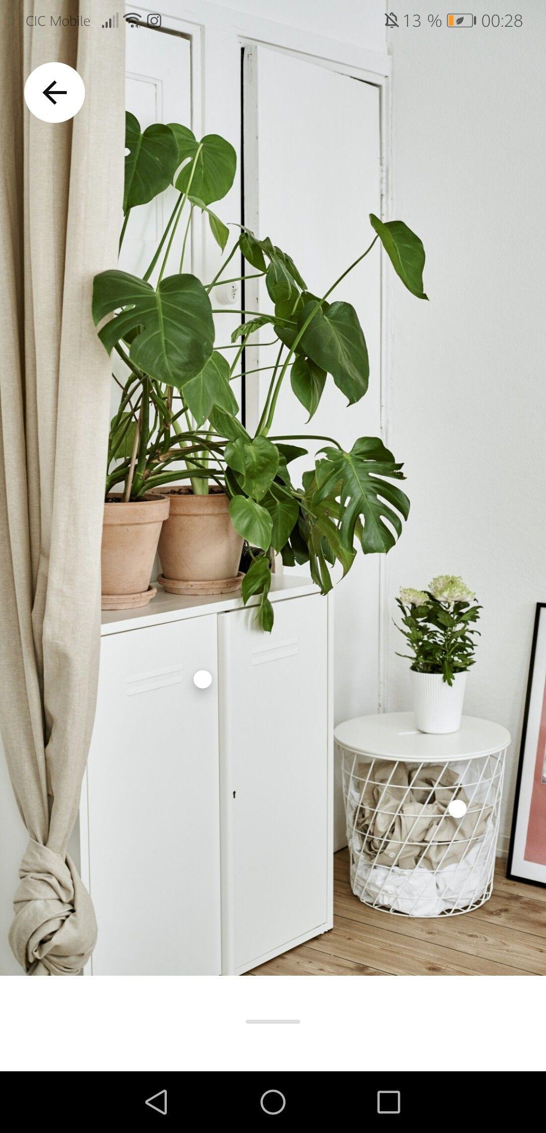 Epingle Par Tiphaine Hary Sur Decoration Plante En 2020 Amenagement Studio Decoration Interieure Deco Chambre Parental