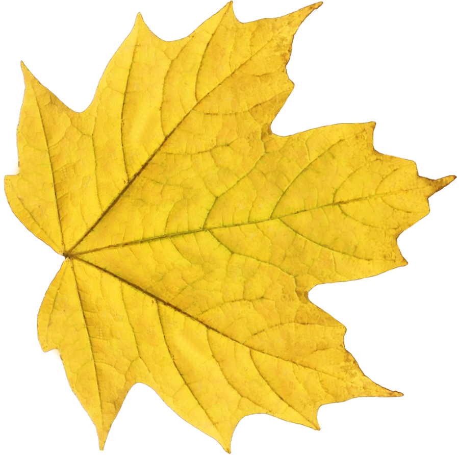 Pin By Hopeless On Lit Harry Potter Yellow Leaves Fall Leaves Png Autumn Leaves
