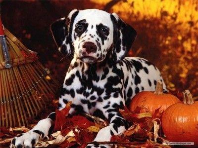 Autumn dog (6 images) - more at comicanimals.com