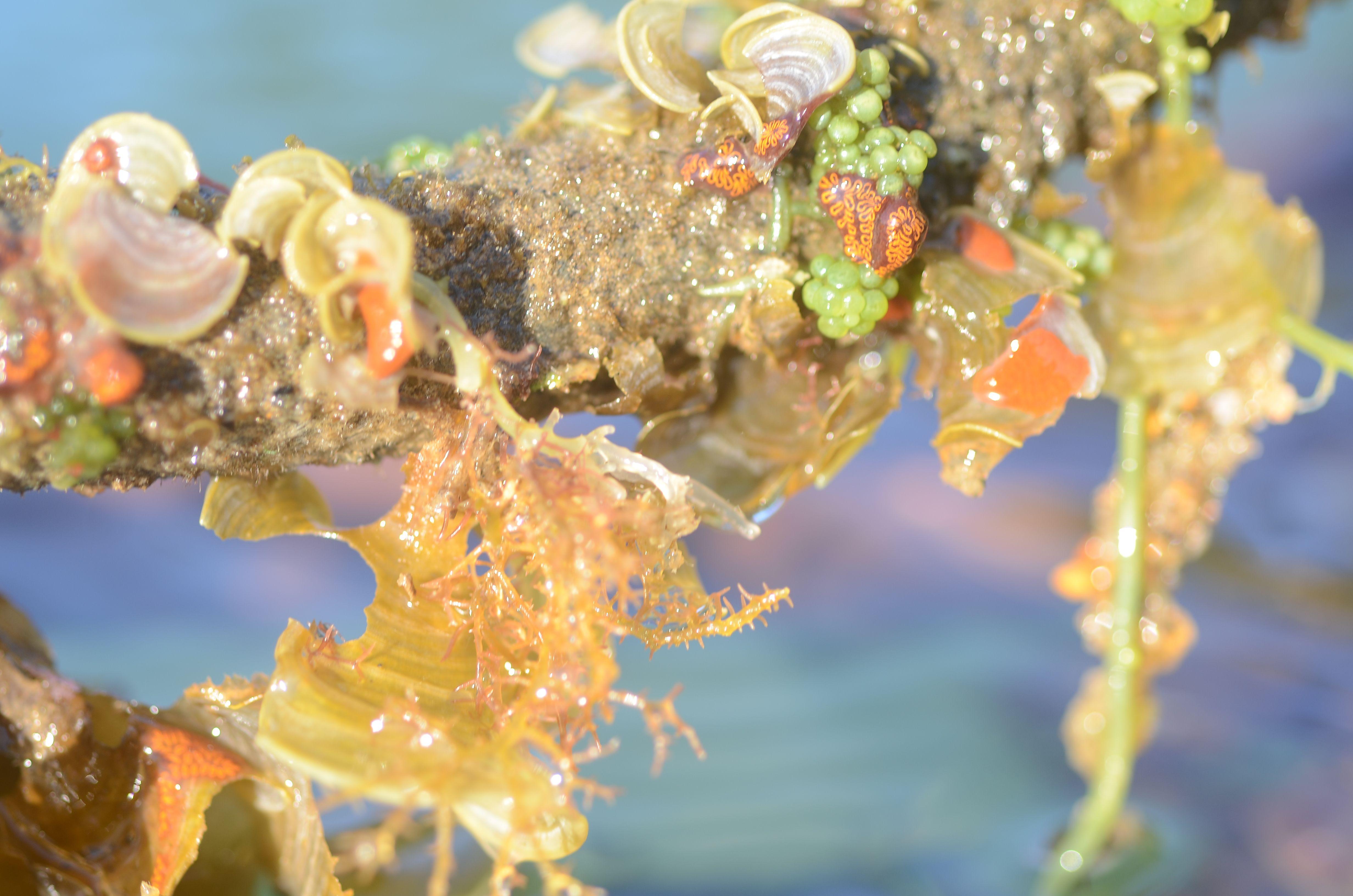 Formas que lembram uvas verdes, outras que nos remete a conchas, espalham-se ao longo da corda. Quem antes amarrava barcos, agora amarra seres aquáticos.   #Brazil, #sea, #ecossistema, #Angra, vida marinha,