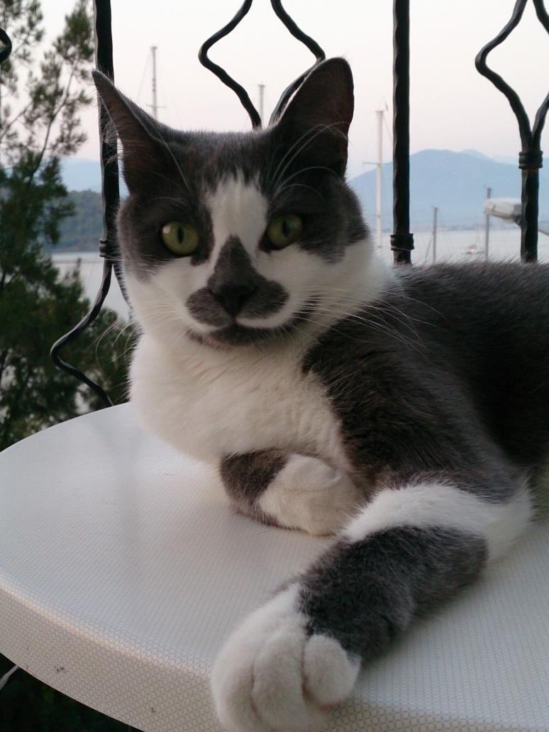 mirnaw My best friend, Cats, Animals