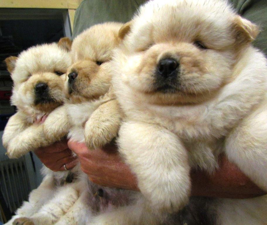 Got Fluffy Baby Puppies Cute Animals Cute Baby Animals