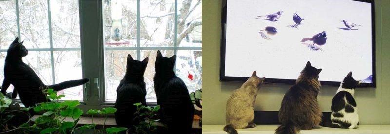 Antes e depois: 10 comportamentos felinos que mudaram com a tecnologia