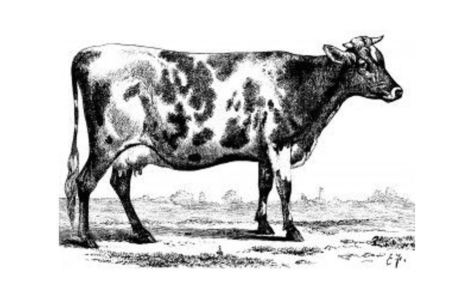 Methane Cow Illustration Clip Art Vintage Animals