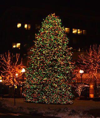 America S Tallest Christmas Trees Christmas Tree Tall Christmas Trees Holiday Christmas Tree