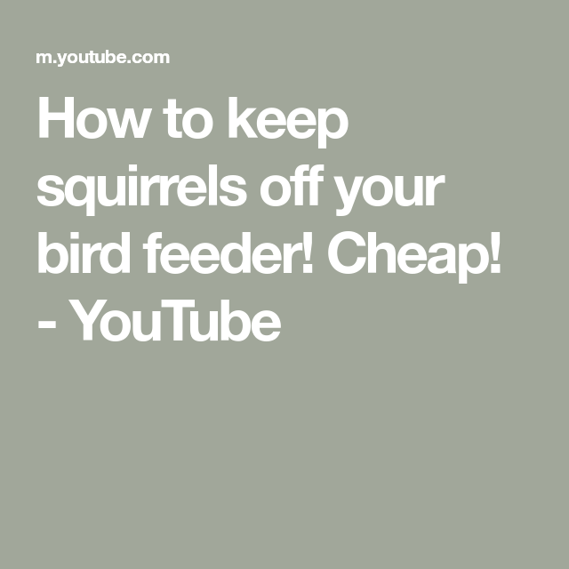 How to keep squirrels off your bird feeder Cheap