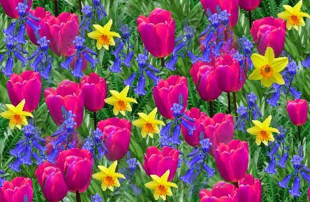 Pictures spring flowers spring flowers backgrounds free pictures spring flowers spring flowers backgrounds free background seamless repeating fill mightylinksfo