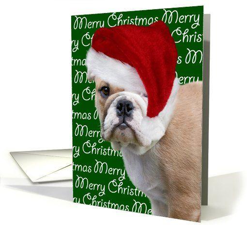 Christmas Card English Bulldog Puppy In Santa Hat Card