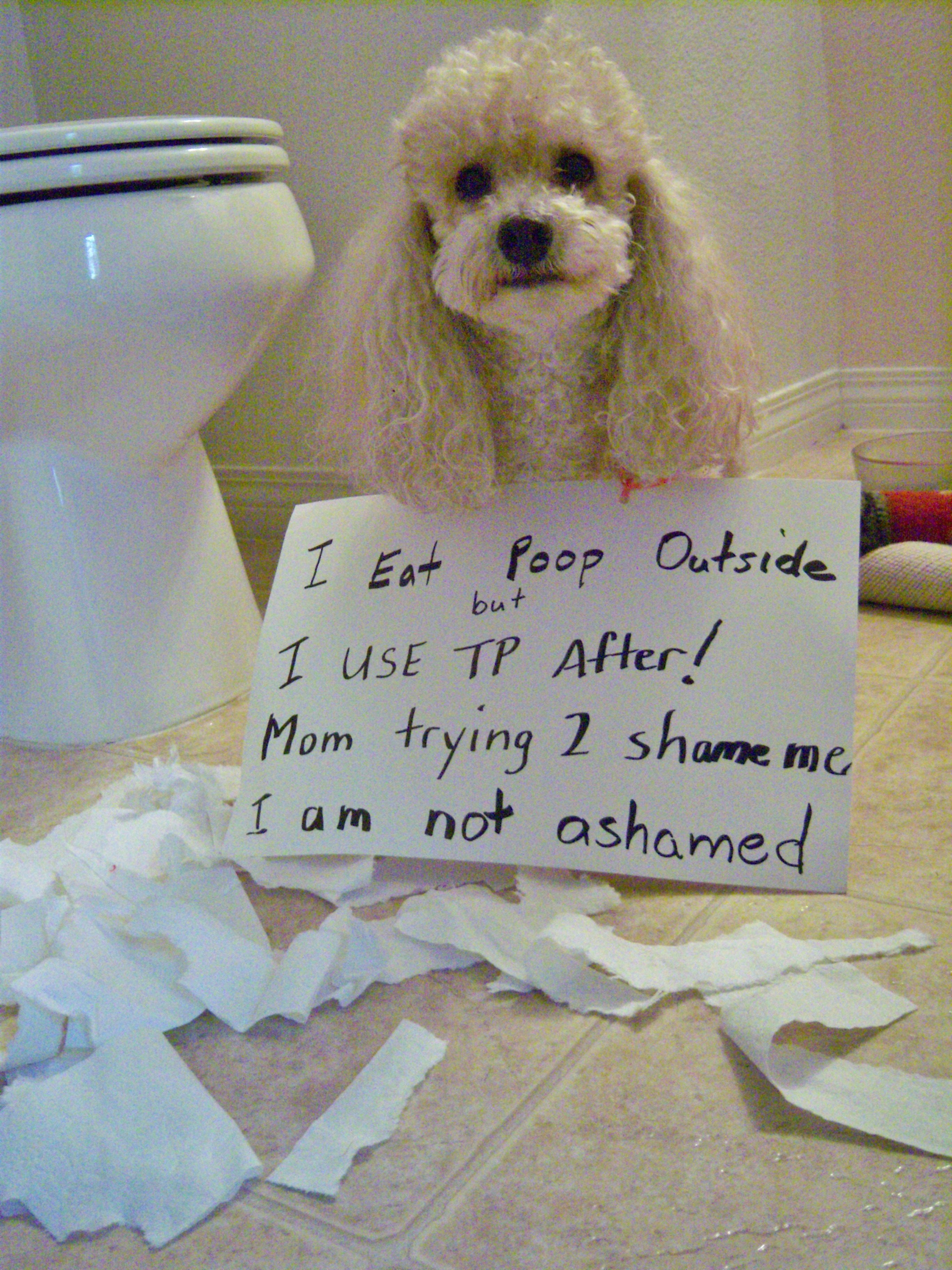 Poodle Shaming His Name Is Chewy I Am Not Kidding Poodle