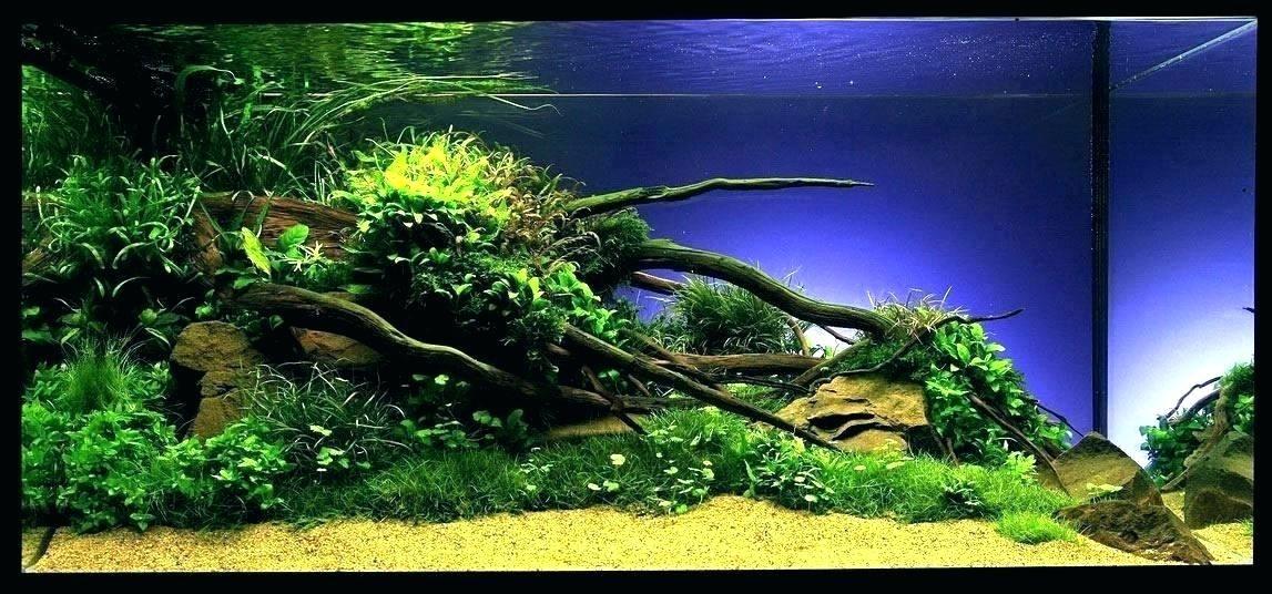 16+ Aquarium landscape ideas information