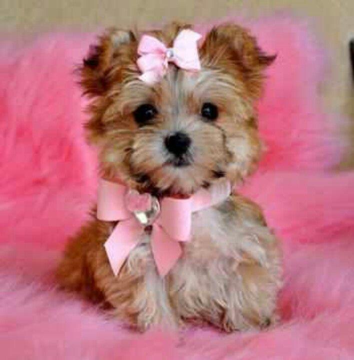 Popular Terrier Bow Adorable Dog - f73f591858f6ff72de0b7330158df394  HD_842341  .jpg