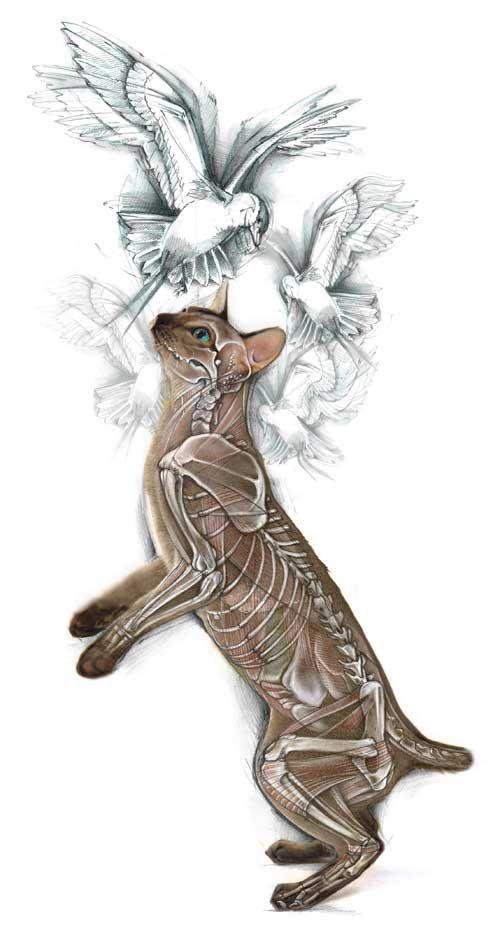Ghosted cat #skeleton #illustration | Anatomy | Pinterest | Ghost ...