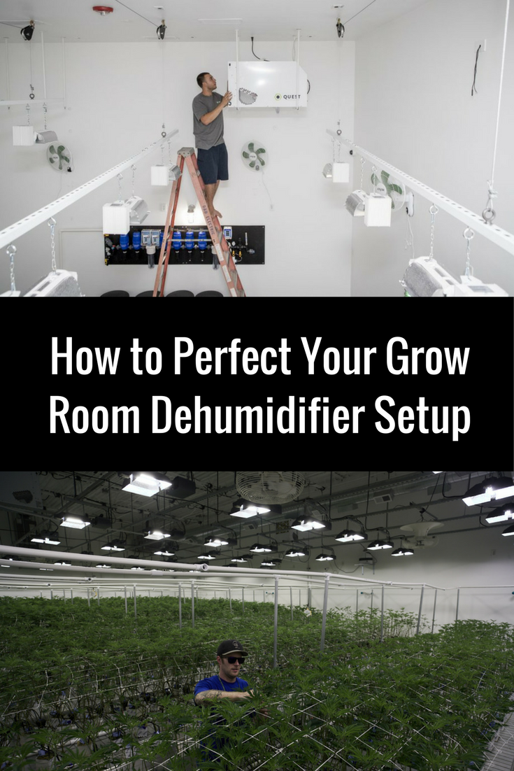Grow Room Setup: Growing Cannabis: How To Perfect Your Grow Room