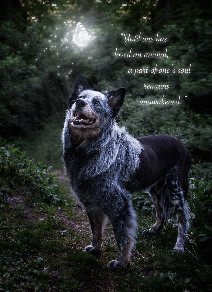 Pet Loss Quotes Dog Photography Surreal Pet Photography