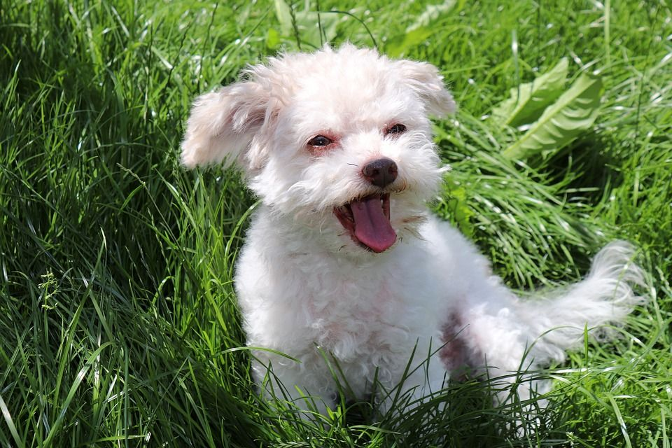 7 tips to stop your dog barking at people aggressive dog