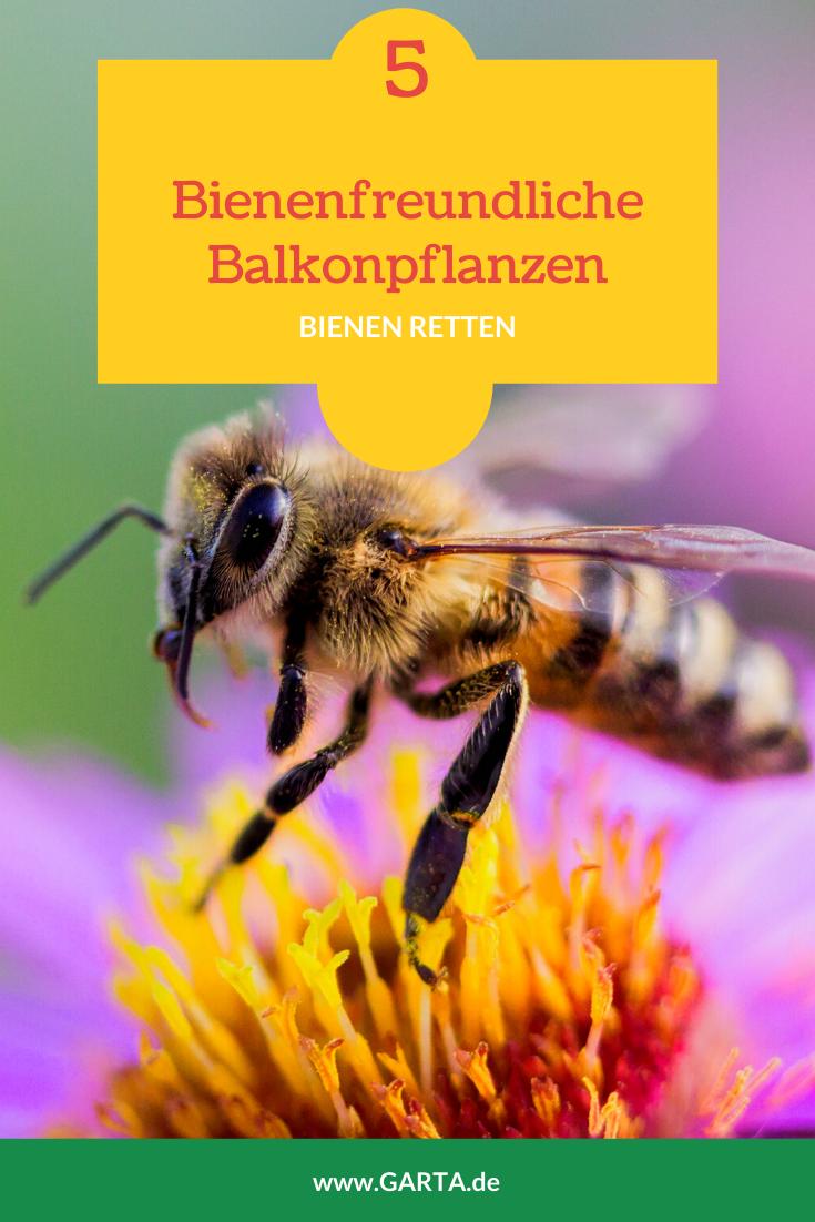 Bienenfreundliche Balkonpflanzen Welche Blumen Mogen Die Bienen Bienenfreundliche Balkonpflanzen Balkon Pflanzen Pflanzen