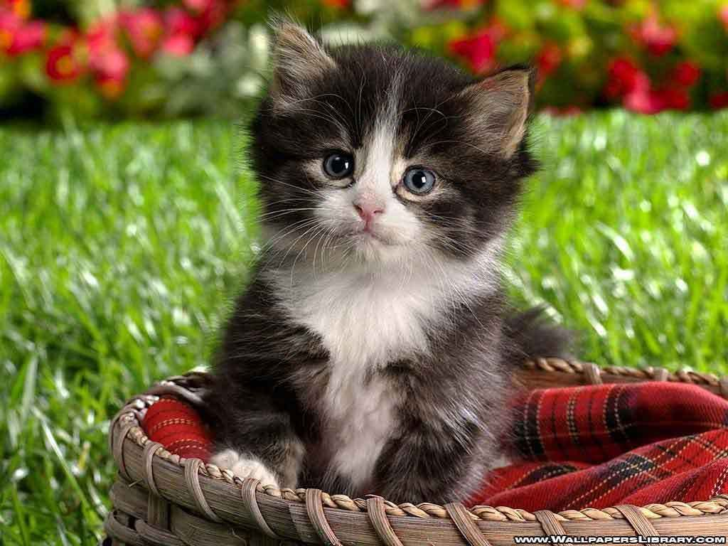 Cat In Red Basket Looking Cutieee Kittens Cutest Kittens Cutest Baby Cute Animals