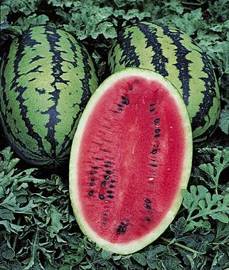 Sweet Ruby Watermelon Seeds and Plants, Vegetable Seeds at Burpee.com