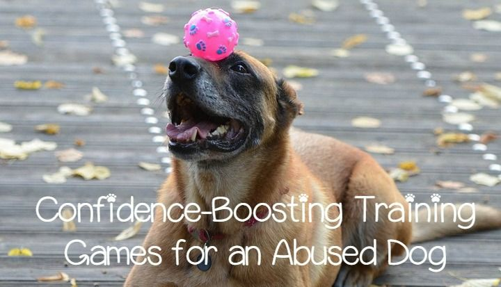 3 Confidence Boosting Training Games For An Abused Dog Dog