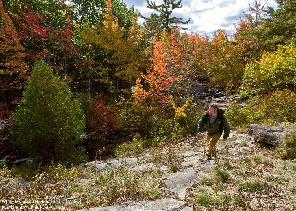 The wilderness society on wilderness society