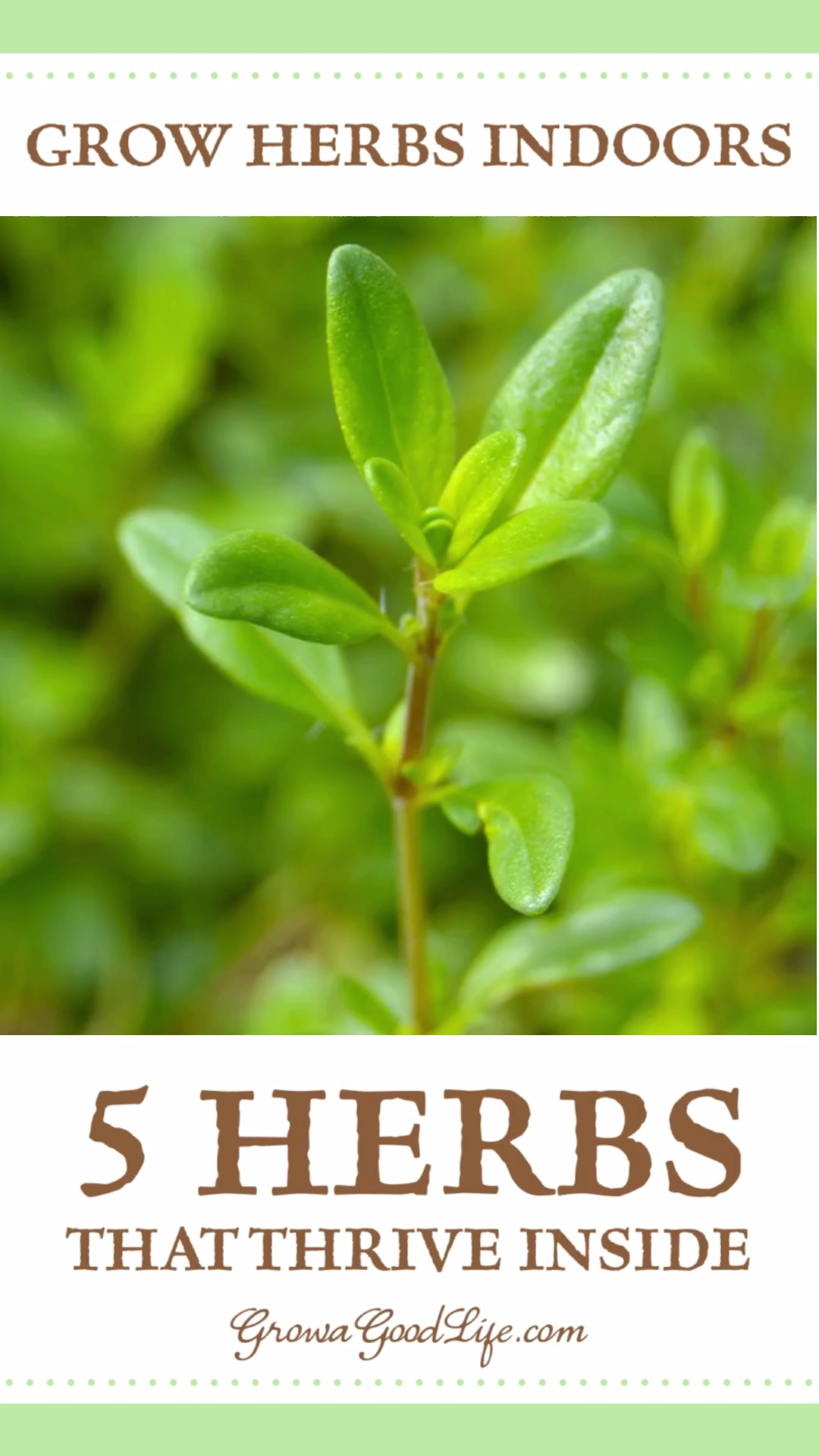 Photo of Grow Herbs Indoors: 5 Herbs that Thrive Inside