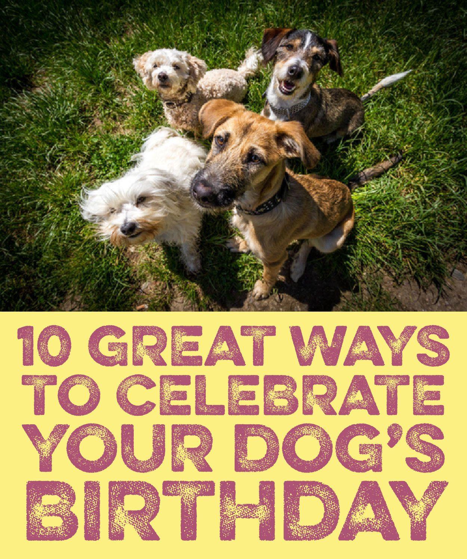 10 Great Ways To Celebrate Your Dog S Birthday Dog Birthday Dogs Your Dog
