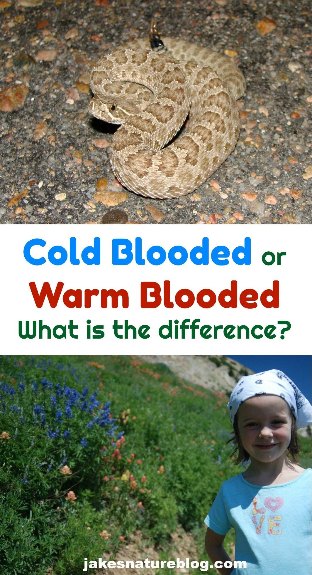An Overview Of Cold Blooded Vs Warm Blooded Animals