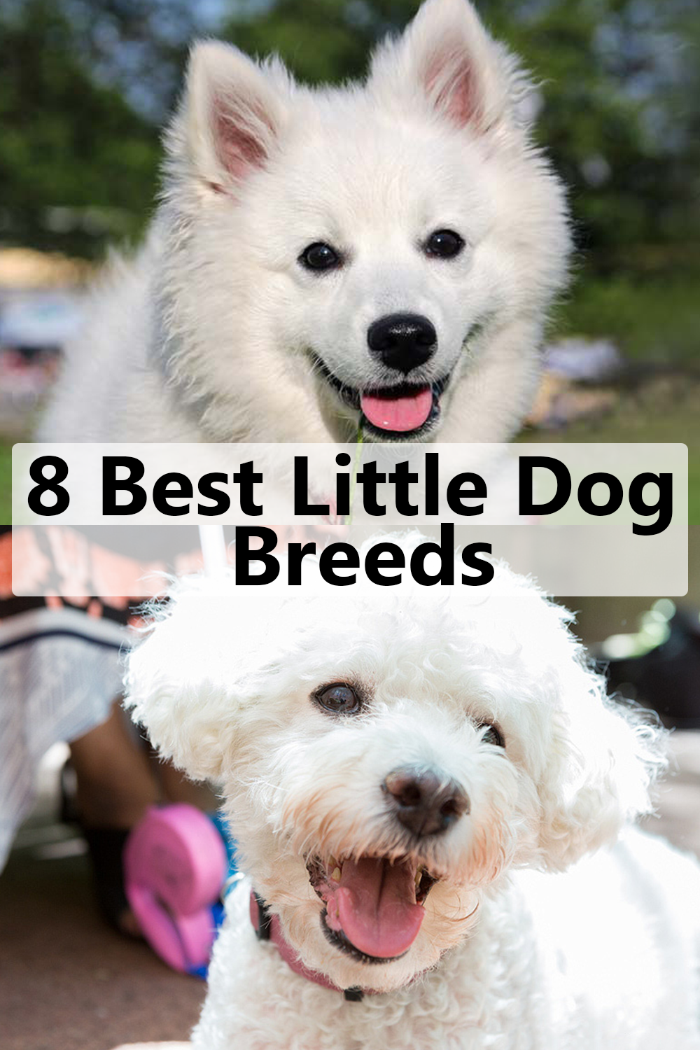 8 Best Small Dog Breeds Best Small Dogs Dog Breeds Dogs