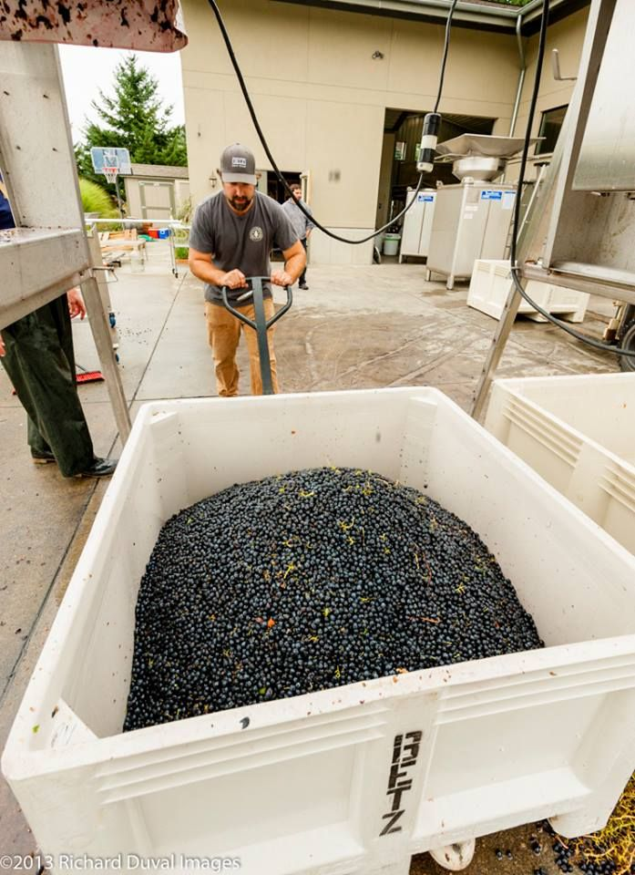 2013 Washington State Wine Harvest | Grapes | Winery