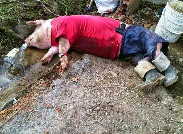 Cerdo Borracho Fotorisa Net Chistes Borrachos Cerdos Divertidos Fotos De Risa