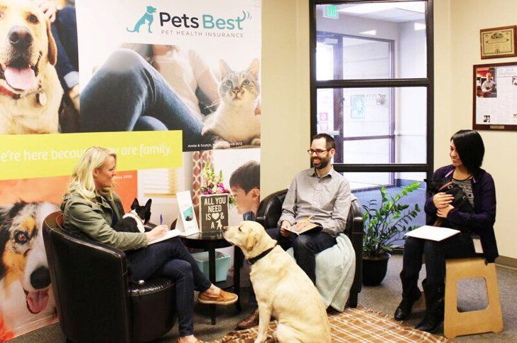 Pets Best Pet Insurance Pet Health Insurance Pet Insurance Reviews Embrace Pet Insurance