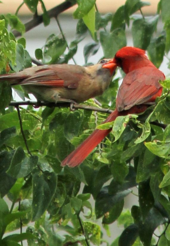 Cozy Little House Beautiful Birds Backyard Birds Cardinal Birds