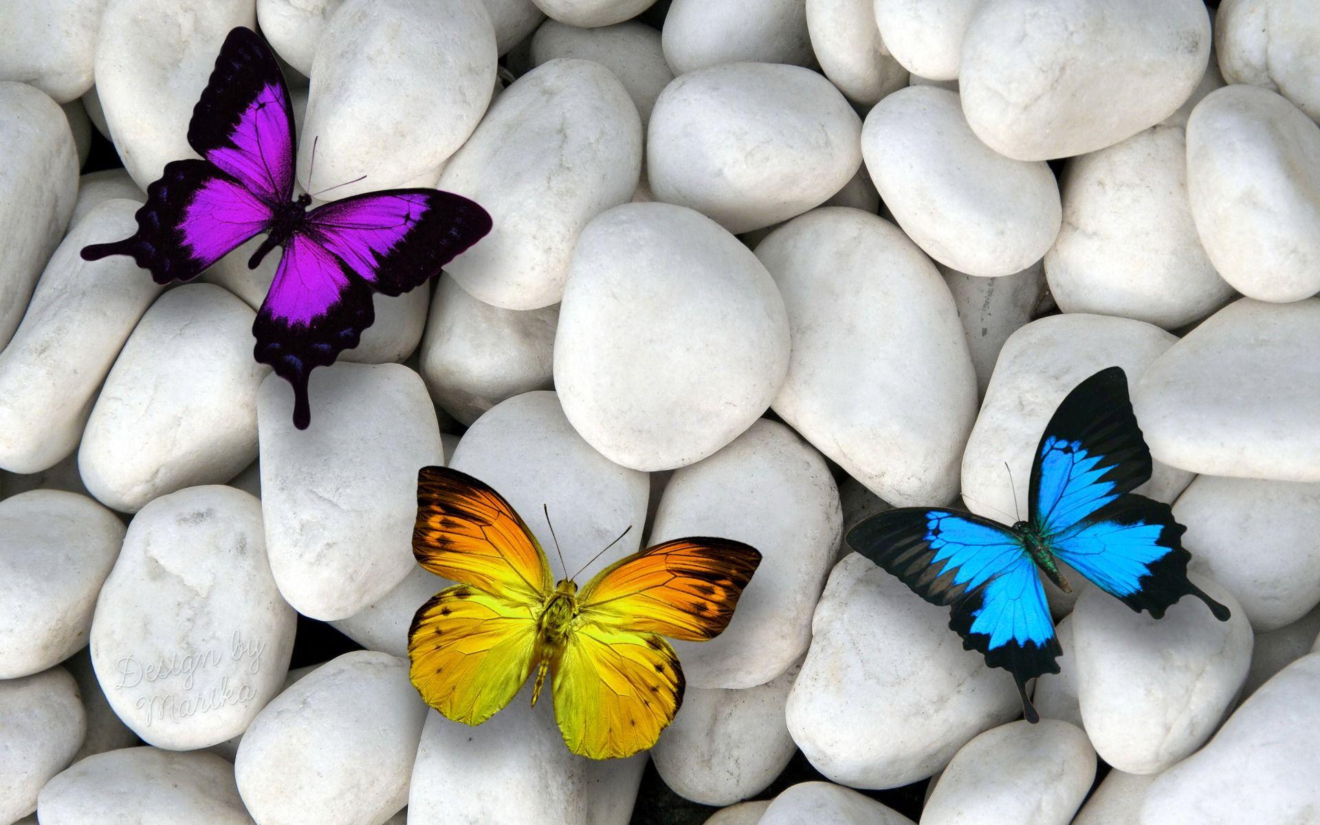 Blue butterfly wallpaper background 1024768 blue butterfly blue butterfly wallpaper background 1024768 blue butterfly wallpapers 46 wallpapers adorable buycottarizona