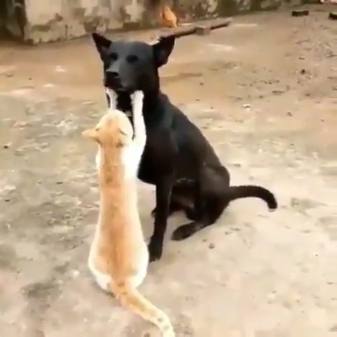 """Have you ever heard the expression """"fighting like cats and"""
