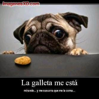 Imagenes Chistosas De Animales Para Facebook Pugs Divertidos Imágenes Divertidas De Perros Humor Divertido Sobre Animales