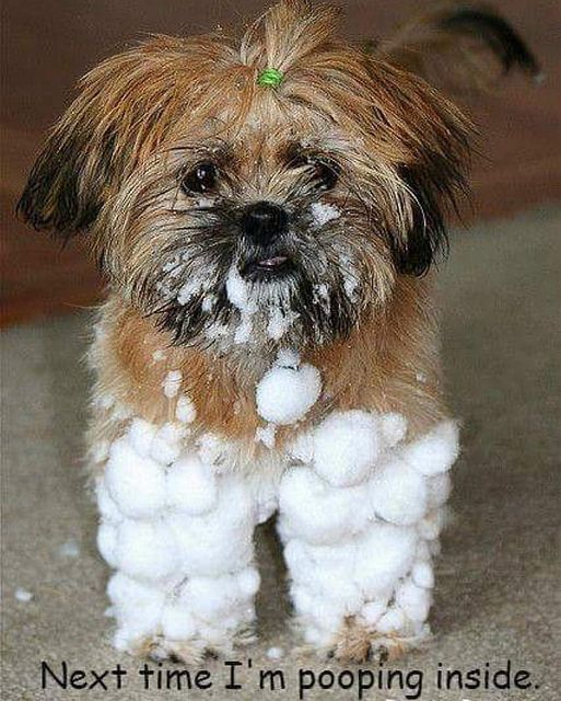 Get Your Furrever Friend Ready For The Snow With A Winter Groom Groom Grooming Pet Boutique Salon Spa Like Love Dog Cat Fluffy Ffpets Furreverf Cute Animals Puppies Cute Dogs