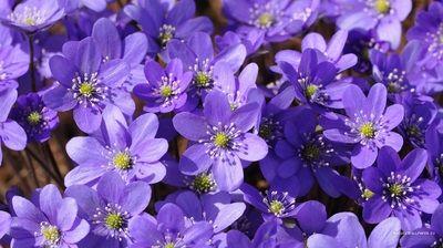 varicoză fotografie de primăvară