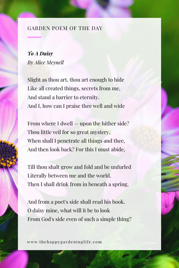 To A Daisy By Alice Meynell Garden Poems Brick Patterns Patio Small Backyard Landscaping