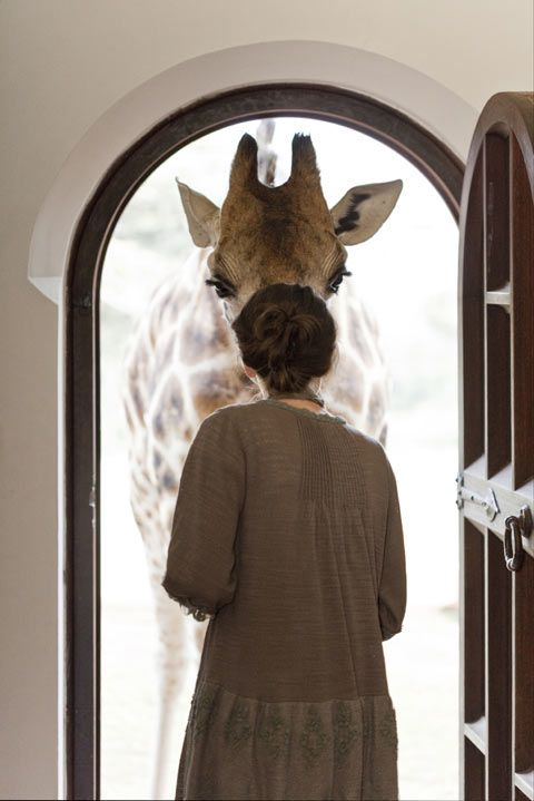 I would be so, so happy if there were a giraffe at my door! :D