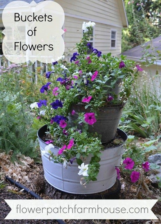 Buckets of Flowers is part of Bucket gardening, Garden, Heirlooms flowers, Flowers, Flower patch, Small gardens - I love my buckets of flowers, they add a rustic charm to my cottage garden and I can change them up seasonally very easily