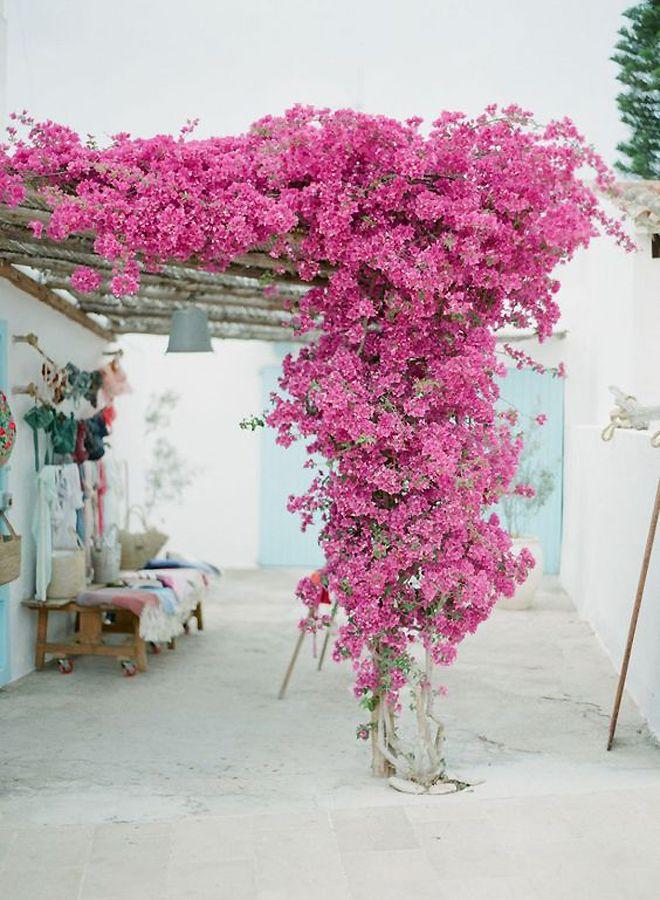 Bougainvillea inspiration garden pinterest bougainvillier jardins et portugal - Tailler un bougainvillier ...