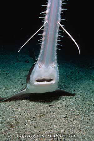 pin by robbi hyde on animals pinterest shark sea and sea creatures