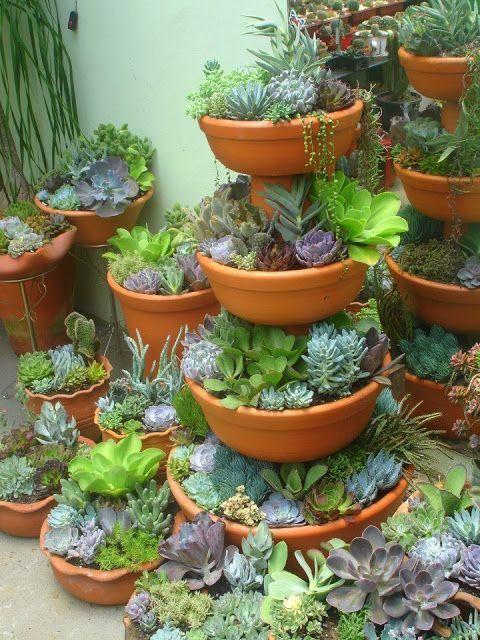 Oh my I need this it looks like the ocean. How awesome would that be in a garden... -  Oh my I need this it looks like the ocean. How awesome would that be in a garden. Succulent border  - #Awesome #diygardenflower #garden #gardenlandscaping #gardensucculent #gardentipsforbeginners #ocean