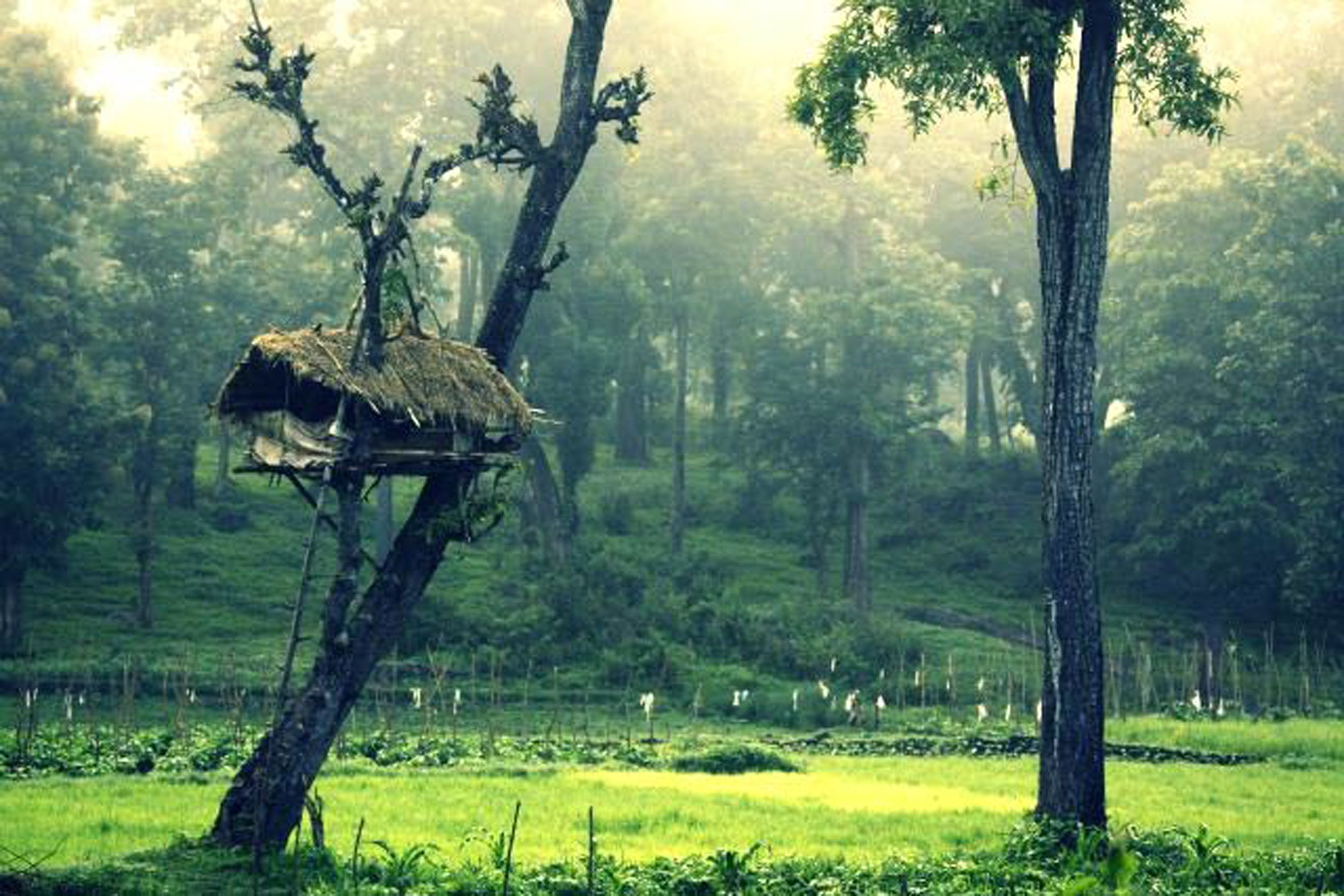 Tree houses which is called as 'Erumadam' in Malayalam is a