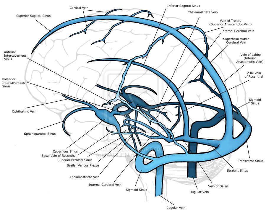 Cerebral Veins by KARCEN | Medicina | Pinterest | Anatomía, Medicina ...